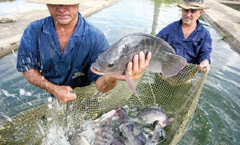Actualmente producimos 27 mil toneladas de pescado con un valor de la producción superior a los 520 mdp