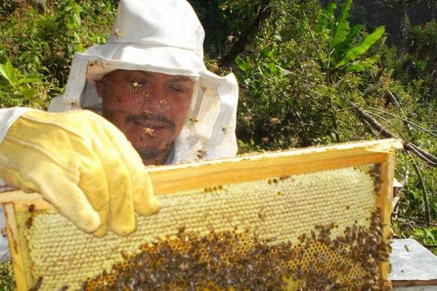 Diez municipios destacan, encabezados por Múgica; una abeja necesitaría realizar 200 mil vuelos para extraer el néctar de las flores que le serviría para generar un kilogramo de miel