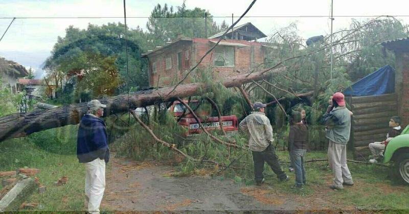 Personal de Protección Civil de Pátzcuaro, Comisión Federal de Electricidad (CFE) y del Ayuntamiento se trasladaron para retirar los árboles y restablecer la energía eléctrica