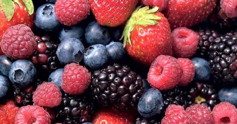 Aguacate, Zarzamora, fresa, limón, durazno, moringa, guayaba, mango, arándano, frambuesa, entre muchos otros ocupan el primero, segundo y tercer lugar nacional