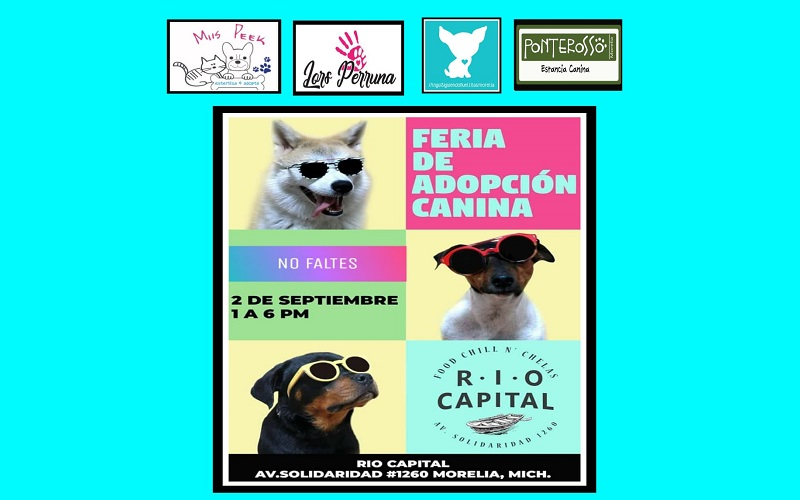 Ese negocio está identificado como Pet Friendly, término con el cual se conoce a los  establecimientos que no prohíben la entrada de las mascotas