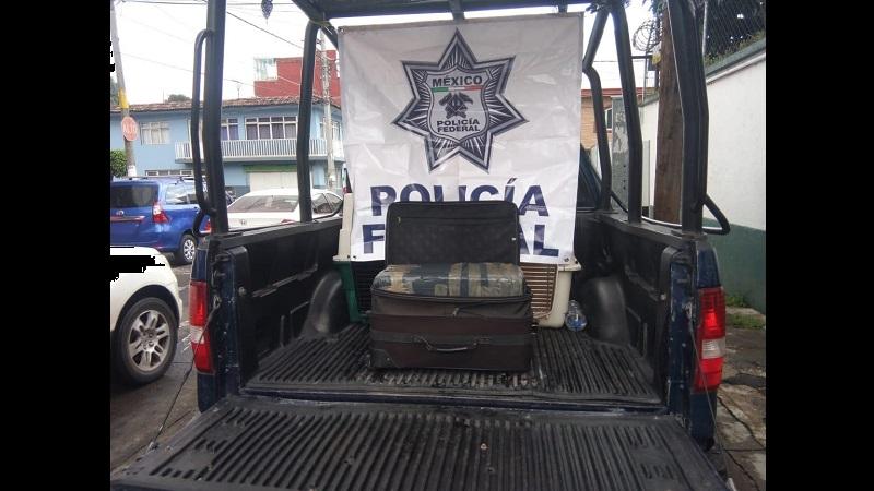 El enervante fue puesto a disposición del agente del Ministerio Público de la Federación, por efectivos de la Policía Federal, en Uruapan
