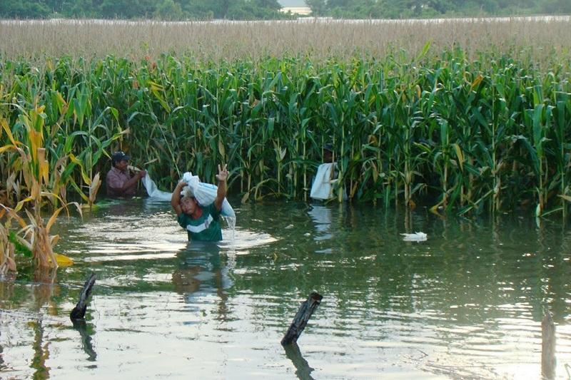 El hecho de que estén inundadas las 2 mil hectáreas, no significa que haya pérdidas totales, toda vez que se tienen que esperar los valuadores hasta que baje la inundación y determinar el grado de afectación
