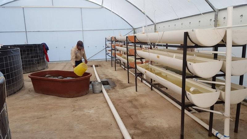 Cabe mencionar que la reserva ecológica cuanta con un módulo de producción intensivo de 10 x 20 metros, equipado con 2 tanques de almacenamiento de agua con una capacidad de 280 mil litros
