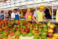 El responsable de la política agropecuaria dio a conocer que, en el país, ocho estados producen el 94% del fruto, siendo Guerrero el productor número uno con el 20% del fruto en el país