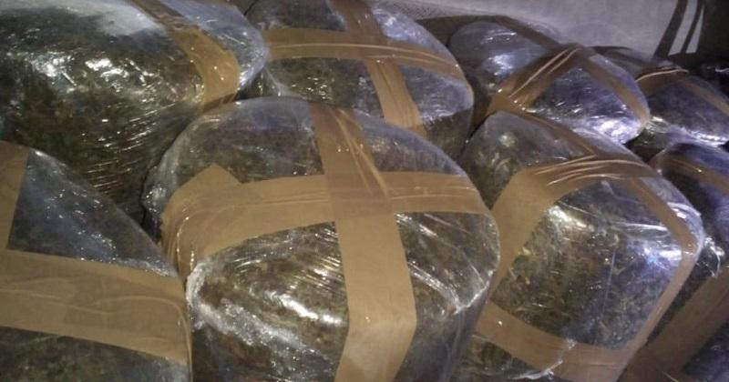 Al inspeccionar la unidad, fueron localizados en la batea de la camioneta, varios paquetes con hierba color verde con las características propias de la marihuana, arrojando un total de 80 kilos de droga