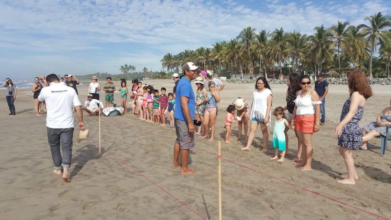 Mil 700 nidos más, esperan el nacimiento de tortugas las cuales serán liberadas una vez que alcancen la edad, detalló Marco Antonio Bernal Hernández
