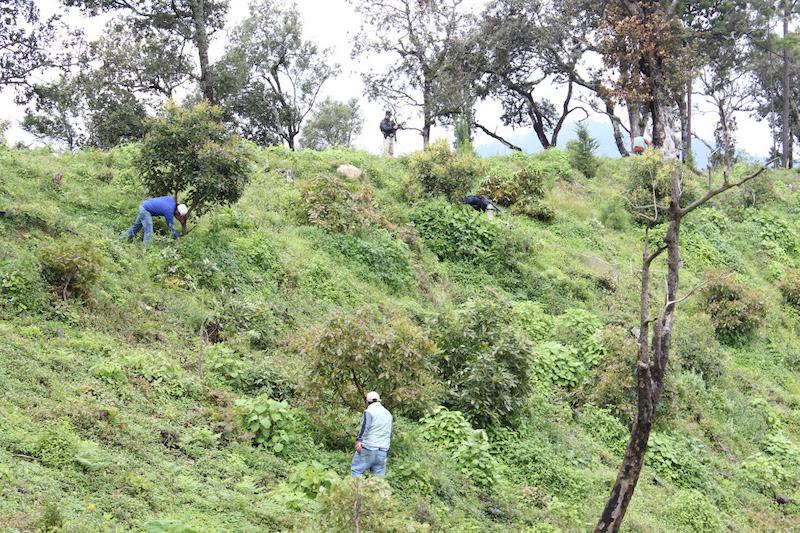 Se identificó el reciente derribo de arbolado en la comunidad de la Escalera, de ese municipio