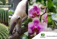 La dependencia estatal, lleva a cabo tareas a favor de la conservación y el aprovechamiento sustentable de las especies endémicas de flora y fauna