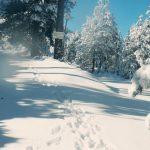Este 21 de diciembre, cuando las manecillas del reloj marquen las 16:22 horas tiempo del centro de México, entrará el invierno en el hemisferio norte y el verano en el cono sur