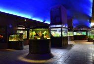 En México, hay mil 319 recintos museísticos, de los cuales alrededor de 160 tienen como objetivo acercar la ciencia y la tecnología