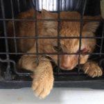 Yareli López Arroyo, titular de Servicios Auxiliares de la Secretaría de Servicios Públicos comentó que recientemente vecinos informaron que dentro de una vivienda se encontraban 30 gatos en condiciones deplorables de abandono y desnutrición